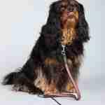 senior dog 1