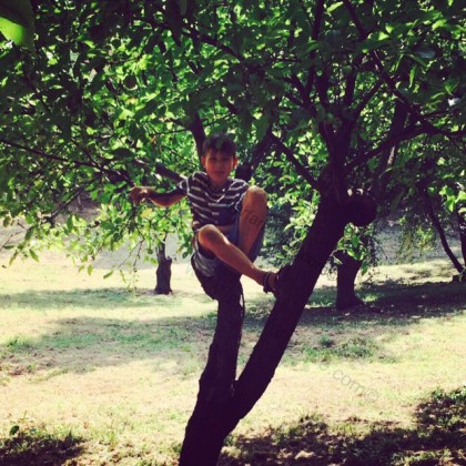 ...or take shade in the apple trees...