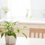 plant on table in bright house