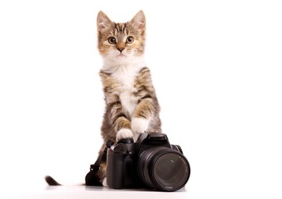 kitten with camera