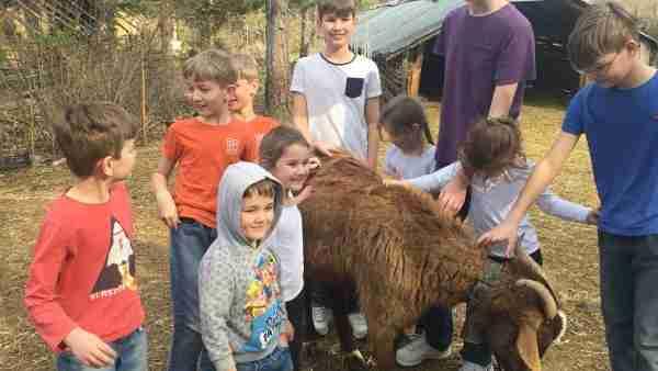 albania farma sotira kids and goat