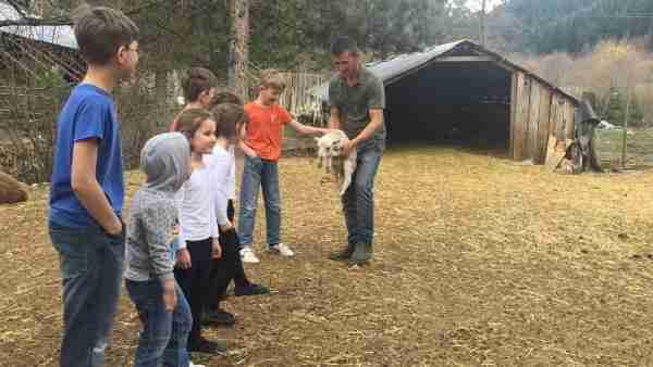albania farma sotira kids and lamb