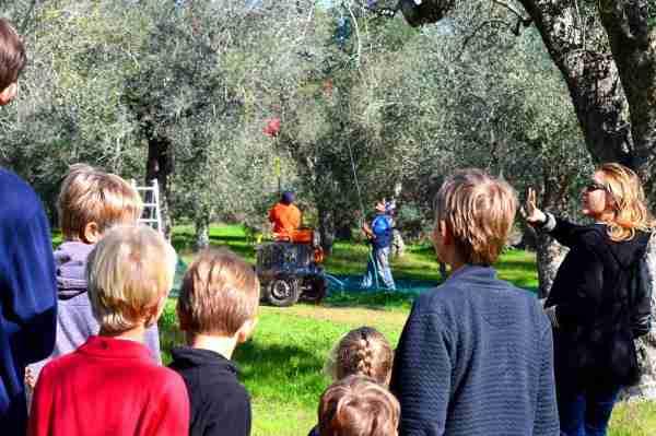 tourango olive picking experiences in Puglia
