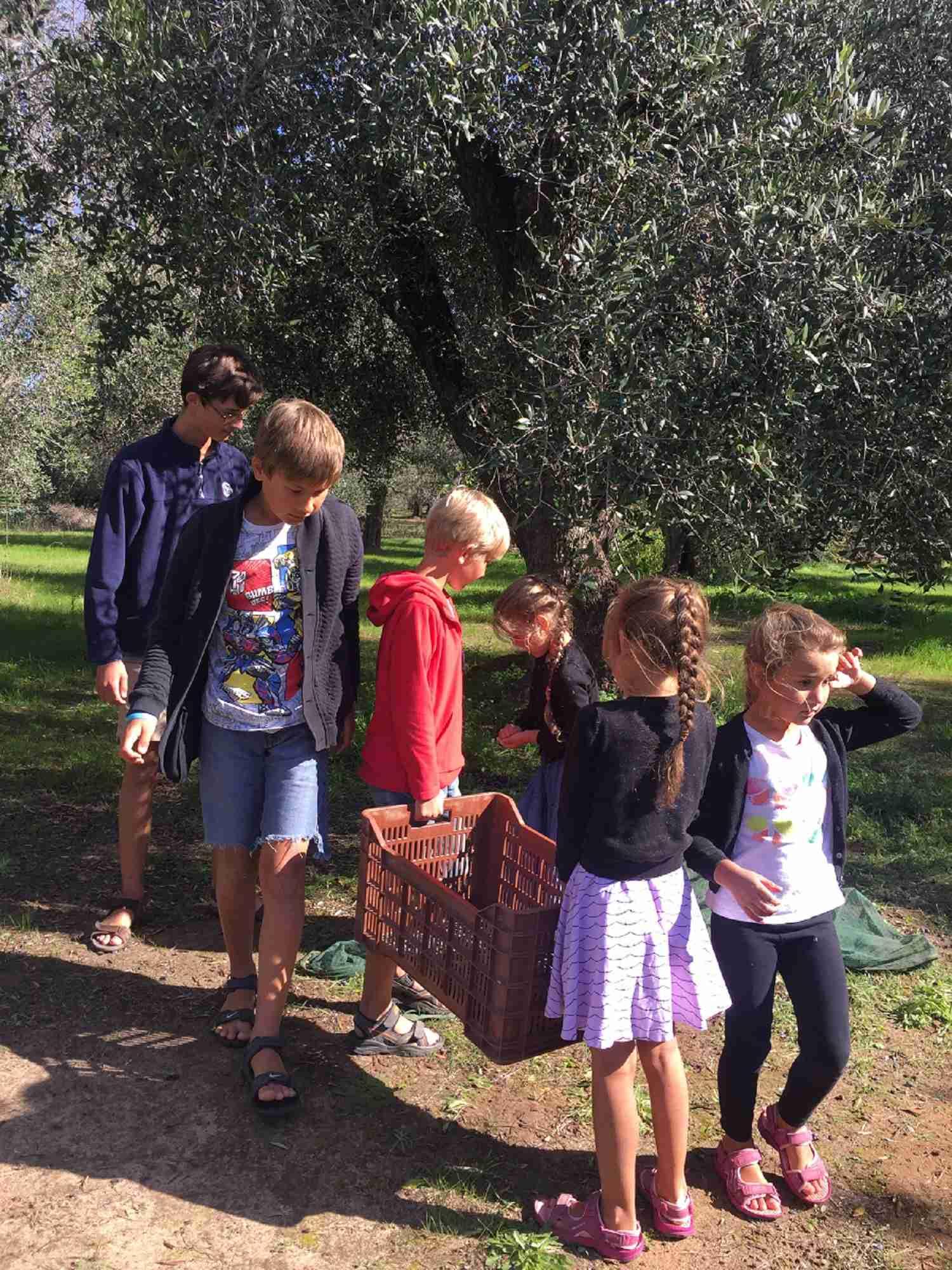 carrying basket of olives
