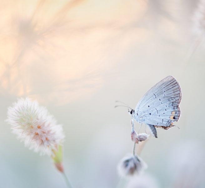 change life butterfly